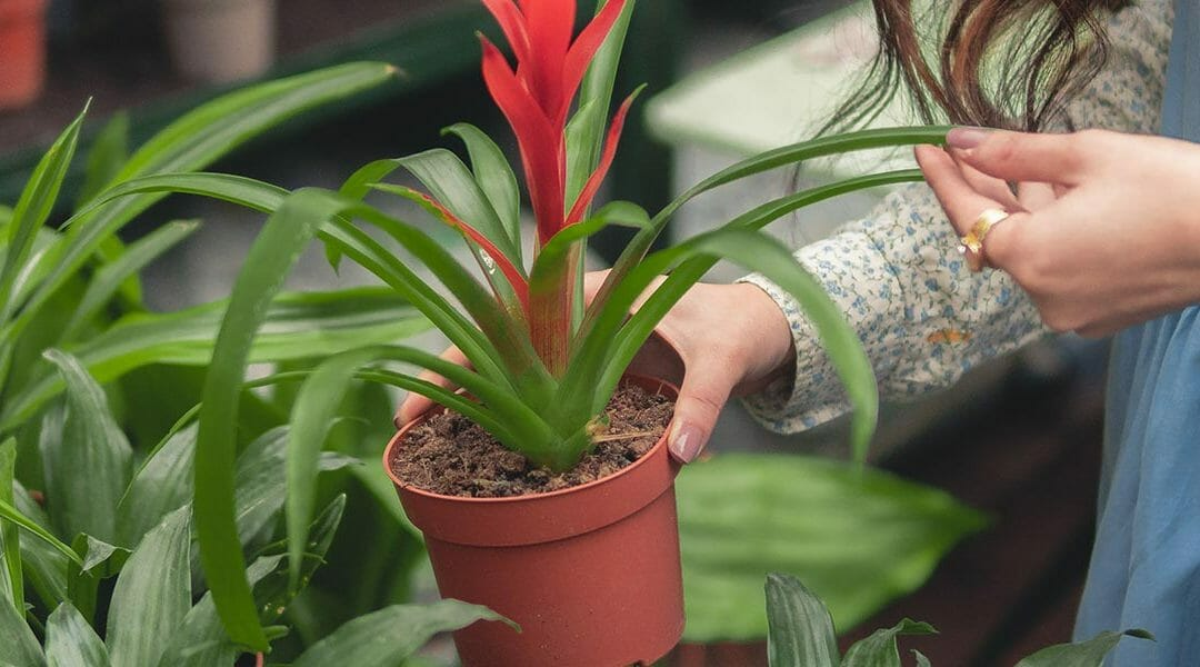 Person holding a potted plant   Garden center advertising ideas
