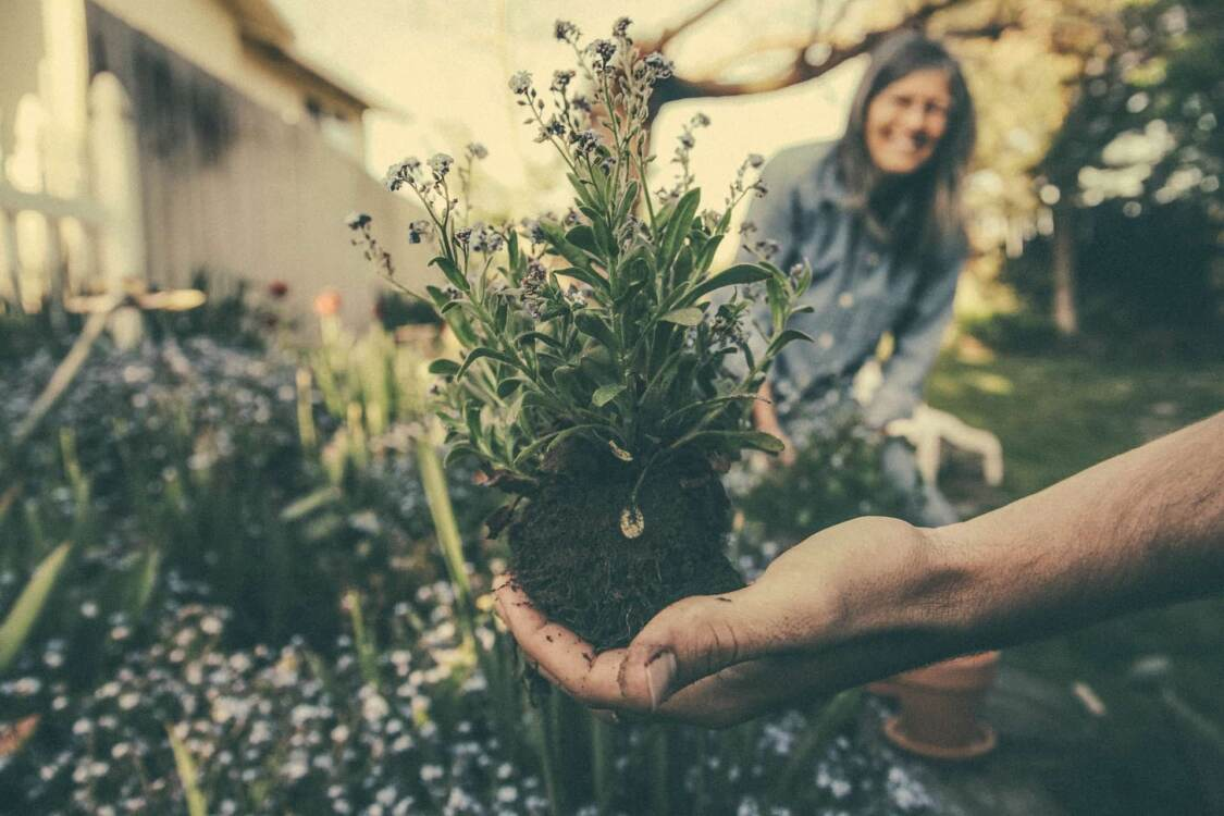 Person holding unpotted plant   Nursery marketing