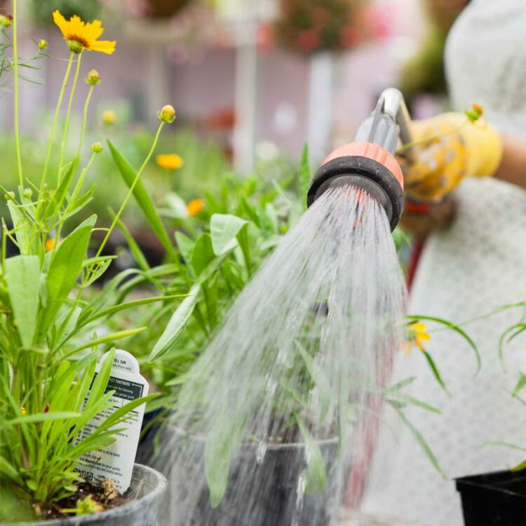 Person watering plants with a hose | Nursery marketing plan